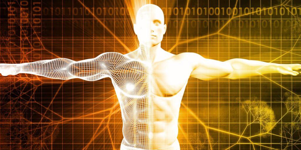 Robotica e ingegneria medica: i ricercatori della Bristol University studiano muscoli artificiali per ripristinare forza e controllo della mobilità in chi li ha persi