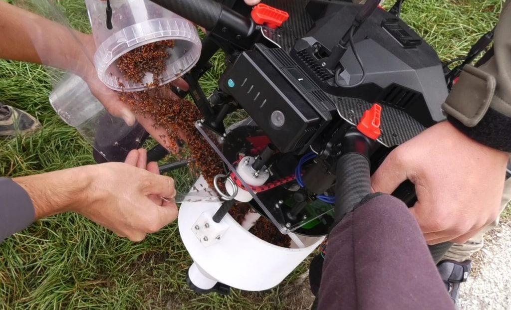 versamento, all'interno del serbatoio del drone, di insetti