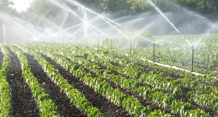 Consumo di acqua in agricoltura