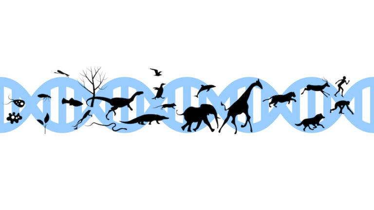 genomica e mondo animale