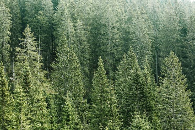 polimeri dalla biomassa