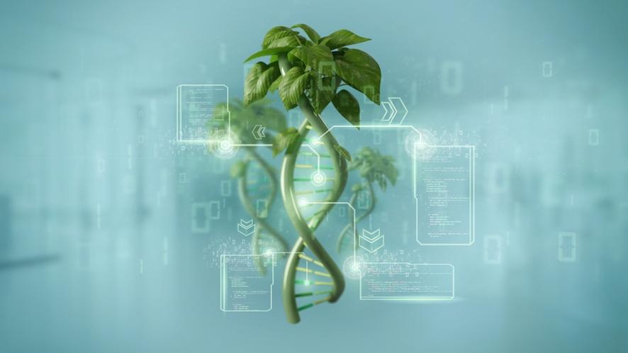 genoma della specie vegetale