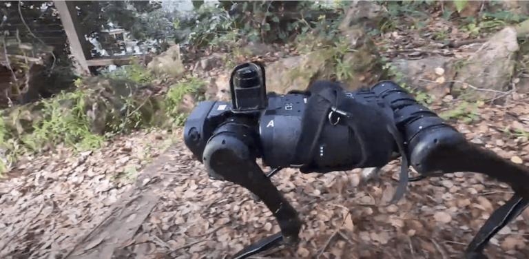 robotica e adattamento all'ambiente