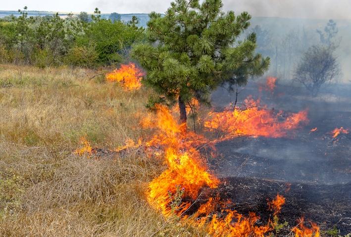 IoT per rilevamento incendi