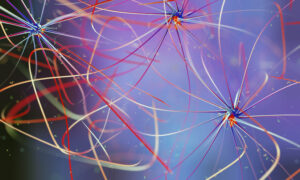 deep learning e deep neural networks